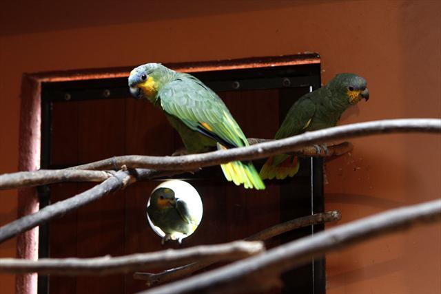 As aves têm acesso ao recinto indoor para se proteger do frio. (Foto:Luiz Costa)